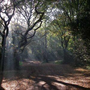 Historic Hainault Forest